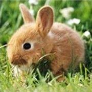 极客兔兔 - 独家号