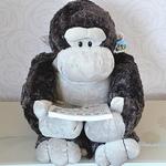 程序猿读书雷达 - 独家号