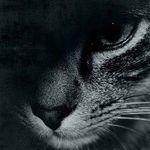 开发的猫 - 独家号