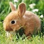极客兔兔 - 开发者头条