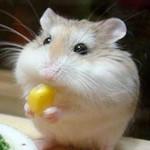 iOS 仓薯翻译 - 独家号