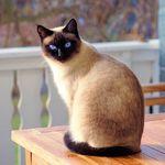 豌豆花下猫 - 开发者头条