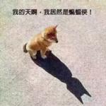 风之子流川枫 - 开发者头条